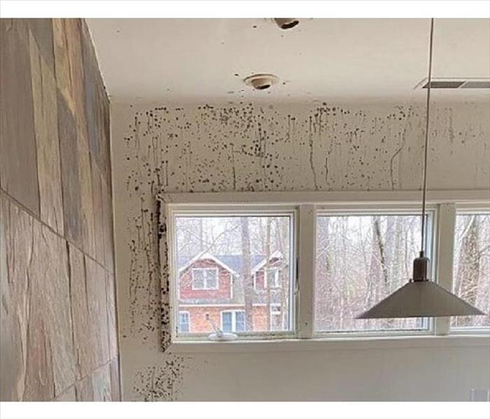 A kitchen wall with spatters of mold showing clearly on it
