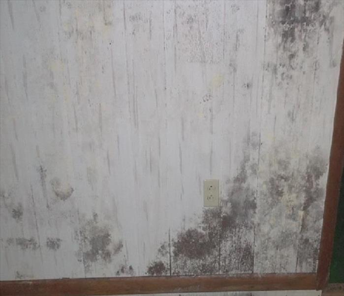 Abandoned home in Wappingers needs full mold remediation