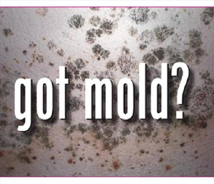 Mold Remediation Mold: What To Do Until Help Arrives